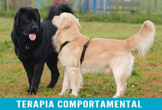 terapia comportamental1