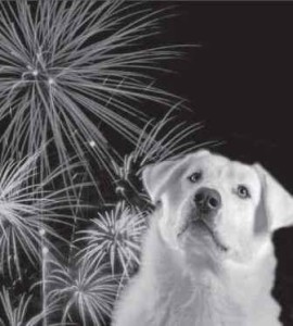 dog-fireworks-270x300